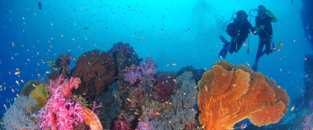 Immersioni isole Similan e Surin