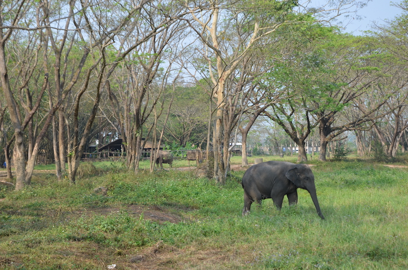 elephant valley chiang rai